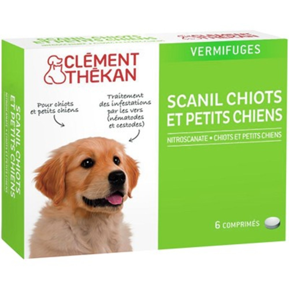 Clement thekan scanil chiots et petits chiens - clement-thekan -144198