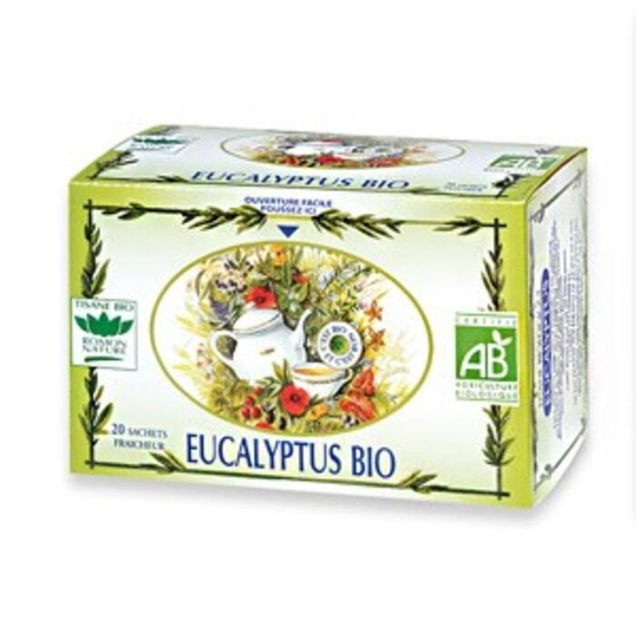 Eucalyptus Romon nature-16187