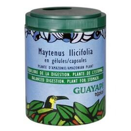 Mayténus poudre - 50.0 g - compléments alimentaires en poudre et gélules - guayapi Action tonique, anti-ulcère et cicatrisante-9285