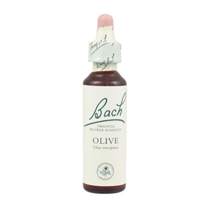Olive n°23 Bach original-8161